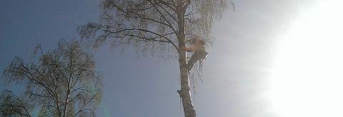 Puunkaato Vantaa, Helsinki, Espoo & koko Uusimaa | Tilaa puiden kaato täältä